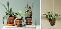 click[s]: Cactussen en vetplanten