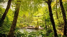 Jungle Pampering Getaways - The Como Shambhala Estate is a Tranquil Health Spa in Indonesia (GALLERY)