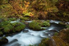<滝の湯川> 蓼科の紅葉は、毎年10月下旬が見頃。
