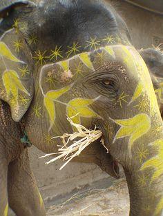 Luli Sanchez – Page 3 – happy buddha breathing Elephant Love, Elephant Art, African Elephant, Elephant Eating, Elephant India, Happy Elephant, All About Elephants, Elephants Never Forget, Beautiful Creatures