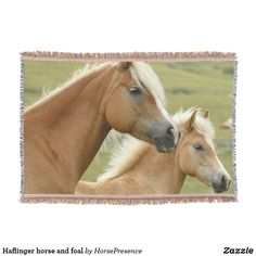 Haflinger horse and foal throw blanket Cheval Haflinger, Haflinger Horse, Most Beautiful Horses, All The Pretty Horses, Palomino, Buy A Horse, Free Horses, Horse Head, Horse Breeds