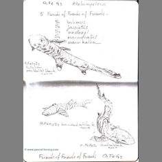 Carnet Bleu: Encyclopedia ofshark vol.III (of 15 volumes) page 14 pencil on paper by Pascal Lecocq The Painter of Blue Pascal Lecocq  2012 lec852ap14 public coll. Brooklyn Art Library NY.  pascal lecocq #shark #sketchbook #art #blue #painterofblue #painting #painter #artist #contemporaryartcurator #artstack #artcartridge #artcollectae #glarify #theartdex #in #pint.