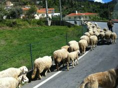 Descubra Portugal: Serra da Estrela e a despedida