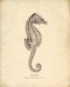 Antique Sea Horse Print