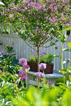 Small Gardens, Outdoor Gardens, Magic Places, Estilo Country, English Country Gardens, Purple Garden, Garden Cottage, Garden Pictures, Garden Borders