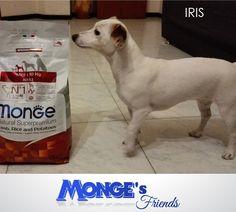 Iris #Mongesfriends