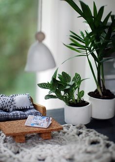 Live miniature plants in our Scandi summer house-style doll house makeover. Photos by Lisa Tilse for We Are Scout.
