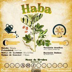Haba2.jpg (700×700)