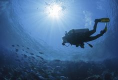 Scuba diving is like drown into an aquariumfull of fishes. Now get opportunity of Scuba Diving in Cabo San Lucas withtours Cabo to make your trip more memorable. Cozumel, Nassau Bahamas, Cabo San Lucas, Flight Attendant Course, Powell River, Bottom Of The Ocean, Mysterious Places, Oceans Of The World, Travel Magazines