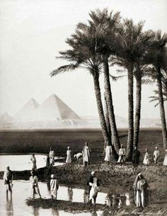The Nile and the Pyramides