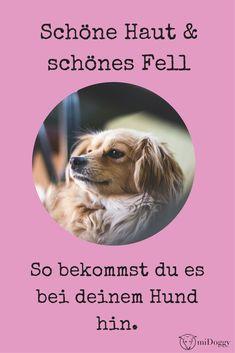 Du wünschst dir für deinen Hund strahlendes Fell und schöne Haut? Hier erfährst du, wie dir das gelingt. Cauda Equina Syndrome, Dog Care, Collie, Dogs, Nature, Animals, Merlin, Community, Dog Nutrition