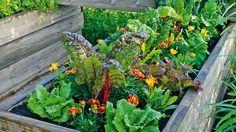 Nemáte čas nazvyš, ale napriek tomu si chcete  dopestovať trochu zeleniny či ovocia? Prácu vám ušetrí  napríklad zvýšený záhon. Viete, ako?