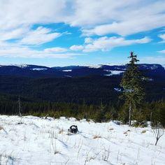 Crăciun / #Navidad / #Christmas. #sky #snow #trees #blue #white #green #nature