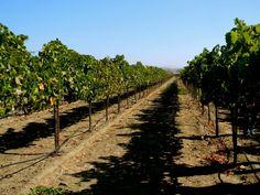 October 2013: Larson Family Winery in Sonoma, California.