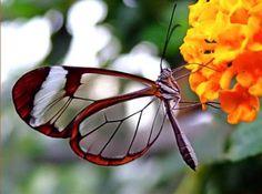 farfalle-barometro-cambiamenti-climatici1