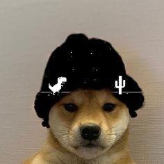 Doge Dog, Doge Meme, Funny Dog Memes, Funny Animal Memes, Gaming Profile Pictures, Cartoon Profile Pictures, Dog Pictures, Weird Pictures, Best Gaming Wallpapers