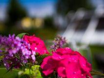 Garten-Salzburg-Parkhotel-Brunauer-Fruehling Salzburg, Best Western, Park, Rose, Flowers, Plants, Lawn And Garden, Pink