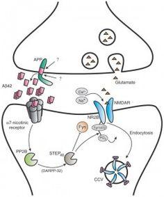 Exelon mechanism of action