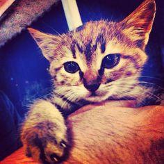 Kittenlove..