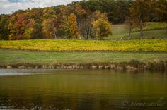 Millbrook Winery is an award winning winery located in the Hudson Valley on the Dutchess County Wine Trail. I was there on a beautiful fall day when the foliage was at peak. Besides the winery there are picnic areas and a wonderful hiking/walking trail. Read more on the blog. A trip to the Dutchess County Wine Trail