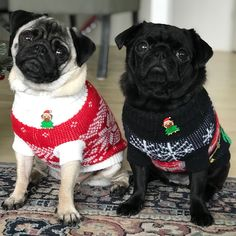 "Get great suggestions on ""black pug pups"". They are readily available for you on our site. Black Pug Puppies, Cute Puppies, Cute Dogs, The Animals, Pug Christmas, Christmas Sweaters, Sweet Dogs, Pug Shirt, Pugs And Kisses"
