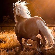 What a beautiful palomino horse!!!                                                                                                                                                      More