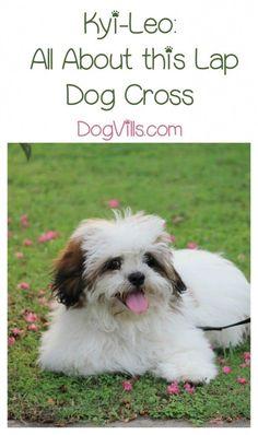 1000 Images About Dog Breeds On Pinterest Dog Breeds