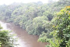 Julio Licinio: 10 Countries With Largest Forest Area.  Congo (D.R) – 1,219,326 km2 (470,784 mi2) which are 52% of the country's land