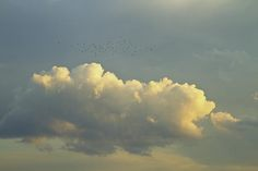 Fine art print of a flock of birds near dramatic clouds at sunset.
