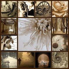 Hello, I found this really pretty mood board ,so tonight lets do Sepia, and lets see if any of you can find the pins within the boards, happy hunting friends !!!!!