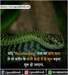 सांप के बारे में 22 मजेदार तथ्य । Snakes In Hindi - ←GazabHindi→ Gernal Knowledge, General Knowledge Facts, Knowledge Quotes, Wow Facts, Real Facts, Funny Facts, Snake Facts, Unbelievable Facts, Amazing Facts