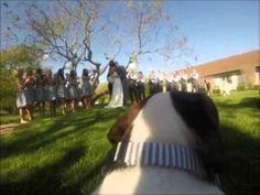 The most creative way to include your dog in your wedding. #deboismopsickwedding GoPro!