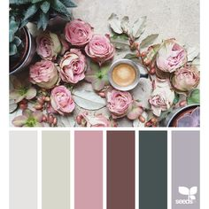 design seeds | for all who ♥ color ❤ liked on Polyvore featuring design seeds