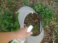 DIY weed killer. 2c vinegar + 1 T liquid soap + 1 T salt