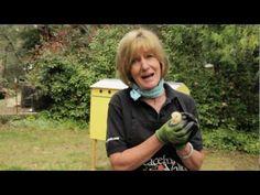 Raising Chickens- short video on the basics