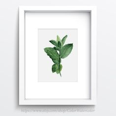 Mint Watercolor Painting, Herb kitchen art, Botanical Wall decor, Kitchen Art Print ,Mint to be, Green Herbs and Spices by ColorWatercolor on Etsy https://www.etsy.com/listing/236090857/mint-watercolor-painting-herb-kitchen
