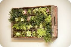 Vertical Gardening in a crate  : ) - Click image to find more Gardening Pinterest pins