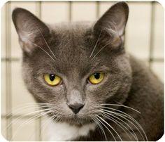 Pet not found Adoption, Pets, Animals, Foster Care Adoption, Animales, Animaux, Animal, Animais, Dieren