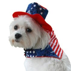 $8.10-$14.00 Anit Accessories Patriotic Bandana and Hat Dog Costume, 20-Inch - Two piece patriotic stars and stripes dog bandana scarf and hat set. Hat has adjustable drawstring. Great July 4th or Memorial Day costume outfit. http://www.amazon.com/dp/B0068EG6AA/?tag=pin2pet-20