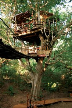 "Wouldn't this be fun!  Book called ""New Tree Houses of the World"" by Pete Nelson."