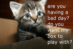 I love cute kittens and this kitten is cute. Do you want my box to play with? Cute Animal Quotes, Funny Animal Pictures, Cute Pictures, Funny Animals, Cute Animals, Cat Quotes, Cat Sayings, Life Quotes, Animal Memes