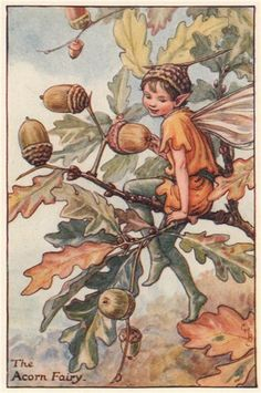 "Vintage print 'The Acorn Fairy' Cicely Mary Barker from ""The Book of the Flower Fairies""; Poem and Pictures by Cicely Mary Barker, Published by Blackie & Son Limited, London  (TAG: PUBLIC DOMAIN)"