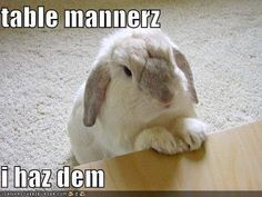 Funny Memes about Rabbits