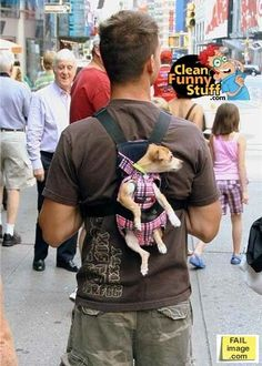 Dog Backpack stella