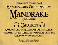 Mandrake Pot Label | This is the label I made for my Daughte… | Flickr