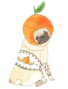 Orange Pug - 100 Days of Dog Doodles by Claire Chambers - Chickenpants.com