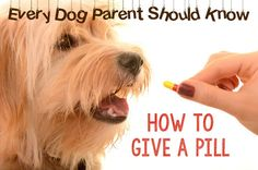 What Every Dog Parent Should Know: Giving Your Dog a Pill | eBay