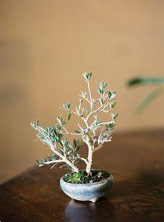 Miniature Bonsai tree | photography by http://www.bretcole.com/