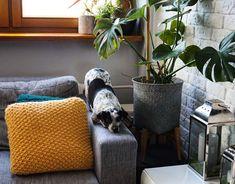 Yoga Dog Pies umie lepiej w jogę niż ja . Yoga Dog, Throw Pillows, Toss Pillows, Cushions, Decorative Pillows, Decor Pillows, Scatter Cushions