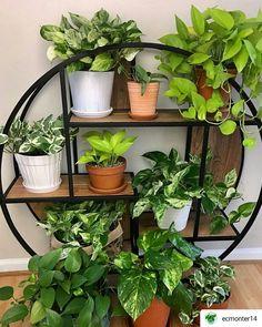 So pretty plant shelfie  #Repost @ecmonter14 • • • • •